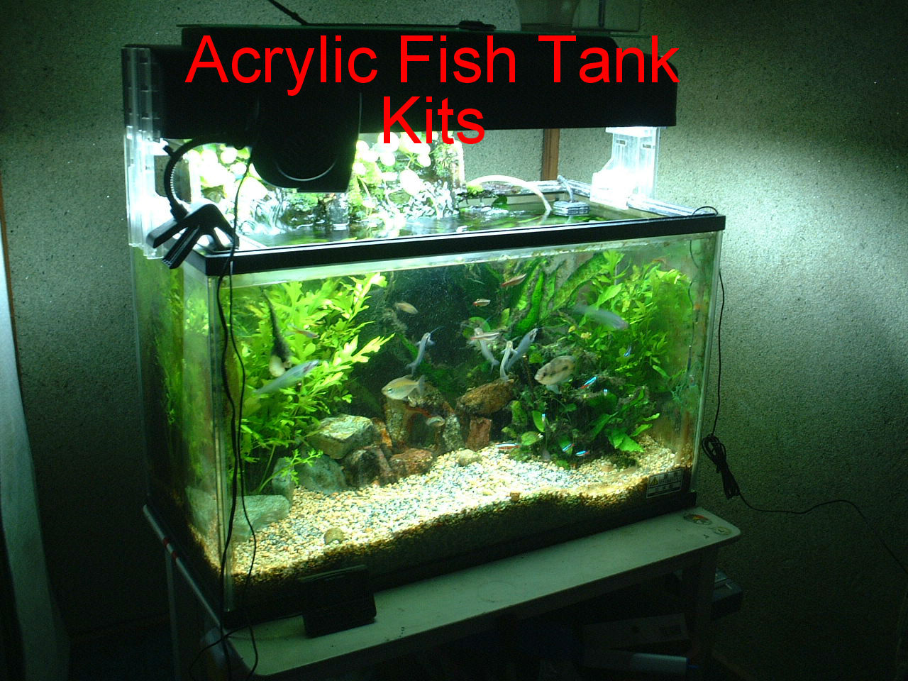 Acrylic fish tank kits news to review for How to build an acrylic fish tank