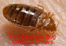 bed bugs Mattress Covers